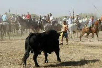 Y en Valladolid, manifestación a favor de la continuidad del Torneo del Toro de la Vega