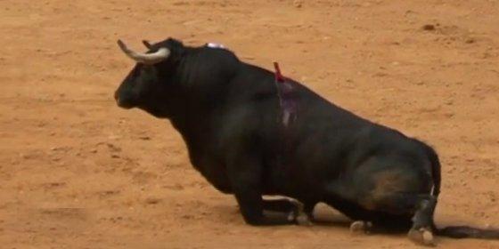 [VÍDEO] Así dejan a un toro parapléjico en plena corrida de rejones