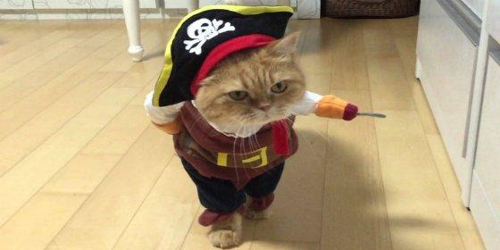 El vídeo del simpático gato pirata que toma al abordaje Facebook