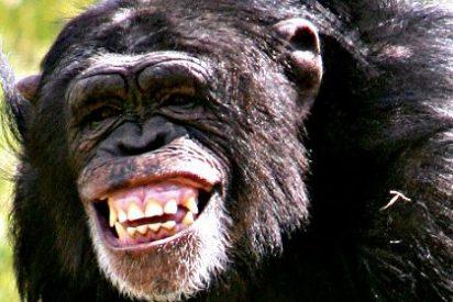El mono que llevó hasta el escondite de 'El chapo' viaja en un Mustang rojo