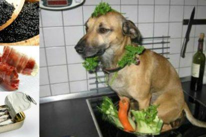 REPORTERO DE GUERRA: Estofado de perro, sardina en lata, jamón y caviar con cuchara (XXIII)