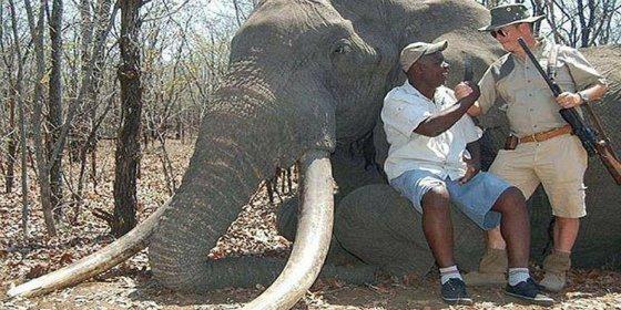 Un alemán paga 54.000 € y se carga al elefante más grande de África