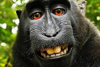 Descubren en el Himalaya un mono que estornuda y un pez que camina