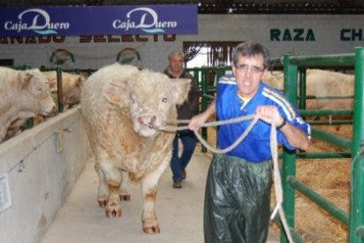 La Feria Agroganadera de Trujillo contará con más de mil cabezas de ganado