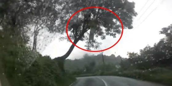 El vídeo de la mujer fantasma que cuelga de un árbol en la carretera