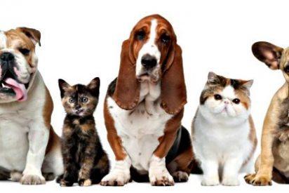 """""""Soy testigo de cómo muchos dueños/as de perros, con traje y corbata, dejan que sus canes defequen en la calle"""""""