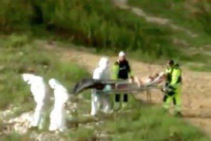 El vídeo del insólito rescate de una sirena a orillas de un río polaco