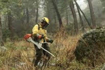 Alcaldes socialistas de Las Hurdes piden que se contrate a sus vecinos para trabajos forestales