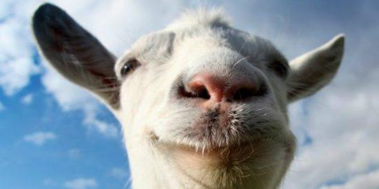 ¡La orgía sexual de unos yihadistas con unas cabras grabada por un drone!