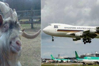 Aterrizaje de emergencia por los tremendos pedos de 2.186 pasajeras