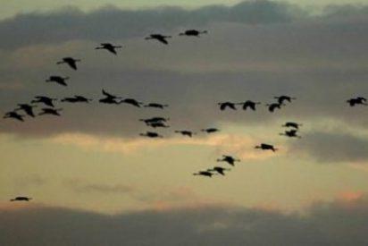 Extremadura difunde sus atractivos turísticos y ornitológicos en Holanda
