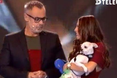 Desfase en 'GH16': desnudo integral (e inútil) y Jordi González, el 'insultador' de perros