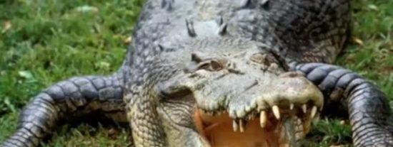 Una cárcel vigilada por cocodrilos para evitar 'mordidas' de funcionarios