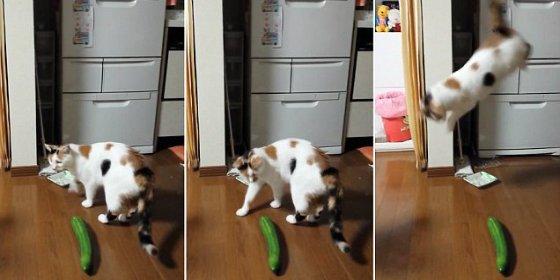Las insólitas y pavorosas reaciones de los gatos ante un pepino