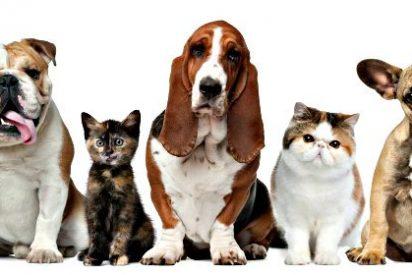 ¿Por qué nos empeñamos en compartir nuestra vida con una mascota?