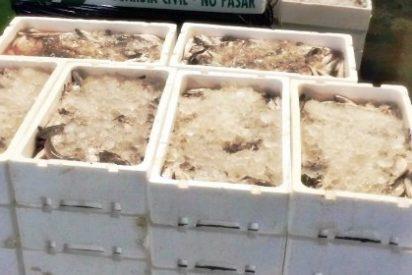 Intervenidos en Mérida 600 kilos de pescado no apto para el consumo