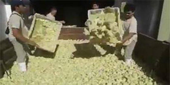 El sacrificio de 9 millones de pollitos que impresiona a los argentinos