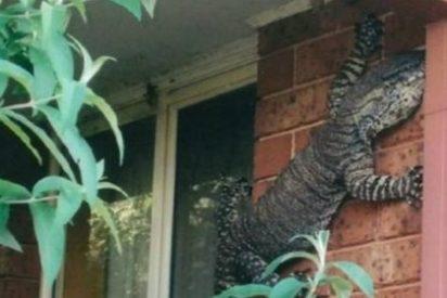 Sale de casa y se encuentra de sopetón con una lagartija monstruosa
