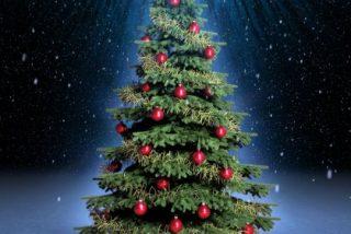 Adenex y Ayuntamiento de Mérida plantarán un árbol navideño con materiales recolectados