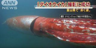 El calamar gigante que se pasea por el puerto como Pedro por su casa