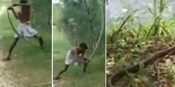 La terrible venganza de un padre contra la cobra real que mató a su hijo