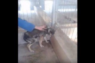 La reacción de este perro maltratado a las caricias te romperá el corazón