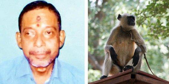 Unos monos enanos y mordiscones matan a un sacerdote a pedradas