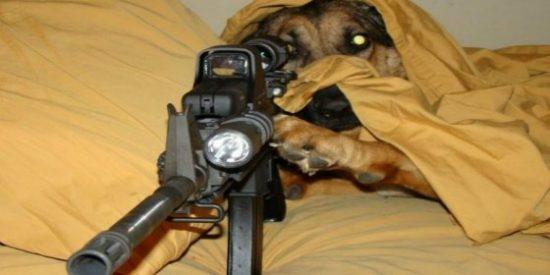 Un perro le pega un tiro en toda la pierna a un repartidor de pizzas