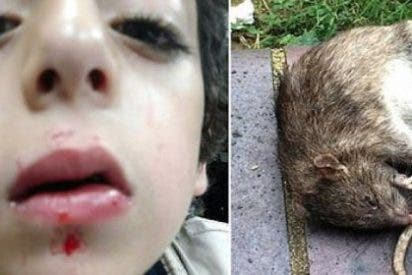 La rata gigante que ataca a un niño mientras duerme... ¡tratando de entrar por su boca!