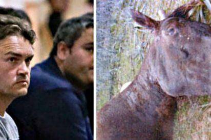 Dejan 'libre y galopante' al condenado por matar a palos a su caballo Sorky