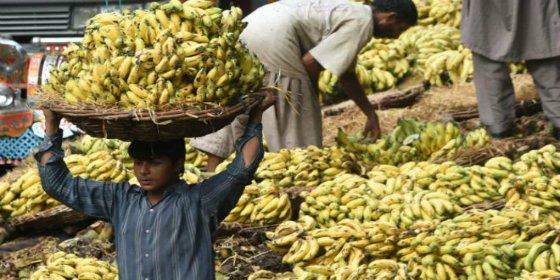 La extraña razón de por qué las bananas están en peligro de extinción