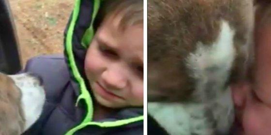 [Vídeo] Las lágrimas de un niño al encontrar a su perro perdido durante un mes