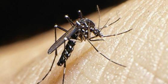 """El virus del Zika se propaga """"de manera explosiva"""" por el continente americano, según la OMS"""