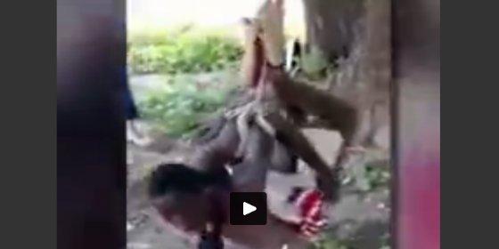 Así torturan unos cabreados musulmanes al menesteroso que les robó un mono rojo