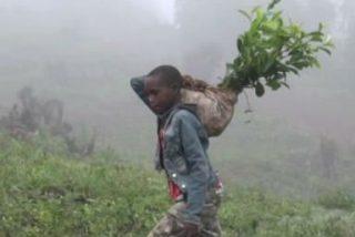 En Uganda hay tierras de la Iglesia que son usadas para la explotación infantil