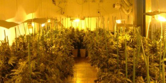 Detenidas tres personas en Don Benito por plantaciones de marihuana halladas en otros tantos domicilios
