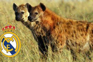 A TV3 el vídeo de las hienas contra el Real Madrid le sale gratis