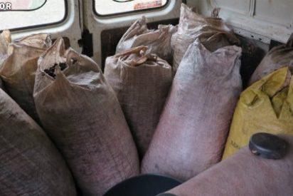 Sorprendidos en Monterrubio de la Serena cuando sustraían unos 1000 kg de aceitunas
