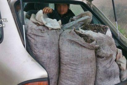 Quince detenidos por robar aceitunas en Campillo de Llerena (Badajoz)