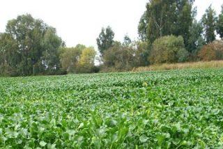 Extremadura pide al Gobierno la intervención de la UME para retirar camalote