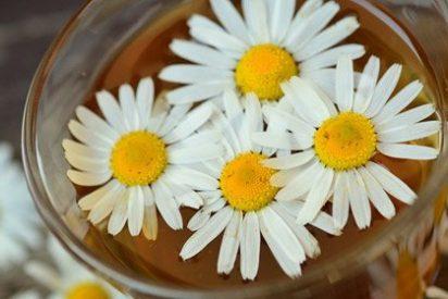 Beneficios de las plantas medicinales y sus usos en el día a día