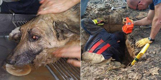[VÍDEO] El drama del perro que se pasó tres días enterrado vivo y llorando