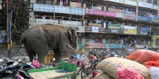 [VÍDEO] El gigantesco elefante que siembra el caos en un pueblo de India