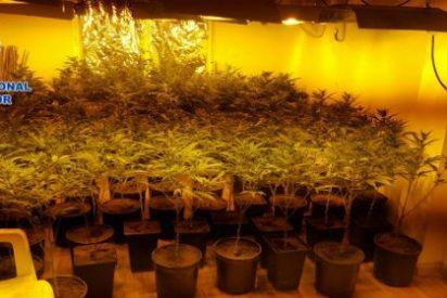 Desmantelada una plantación de marihuana en el interior de un edificio ocupado de Talavera de la Reina