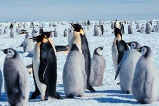 La espantosa muerte de 150.000 pingüinos en la Antártida por un gigantesco iceberg