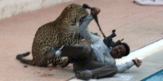 [VÍDEO] El feroz leopardo entra en una escuela india y se enzarza a bocados