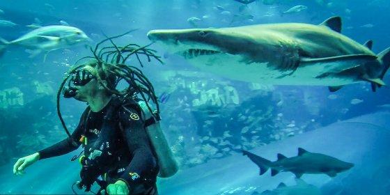 La feroz tiburón embarazada que casi le arranca un brazo a un buzo