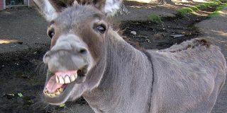 El vídeo del cochino terrorista musulmán que viola a un burro