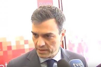 Pedro Sánchez se arrodilla ante Tsipras para que interceda ante Iglesias y le deje gobernar