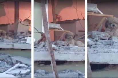 El perrito que no deja su casa tras la muerte de sus dueños en el terremoto